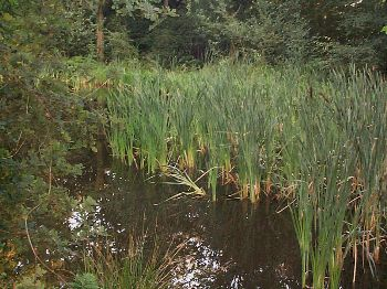Normandy Pond with Pond Grass